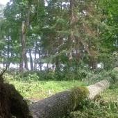 Metsandusettevõte pakub tööd-1